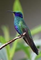 hummingbird-1823829_640